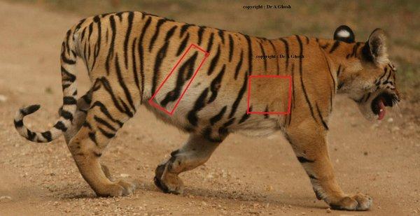 Name:  cub4.jpg Views: 1901 Size:  39.9 KB