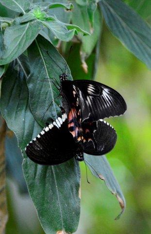 Butterfly Park, Bannerghatta, Bangalore.jpg