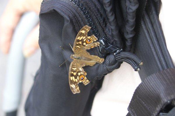 Name:  Critter on bino bag.jpg Views: 338 Size:  47.1 KB