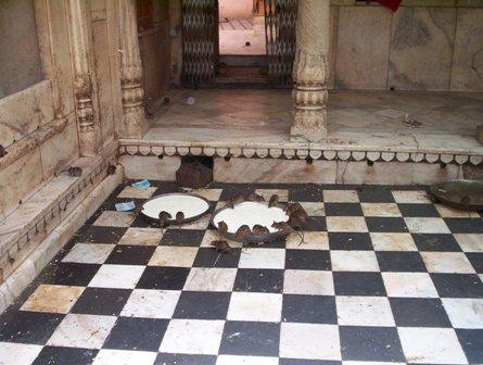 Karni Mata Rat Temple India Travel Forum Indiamike Com