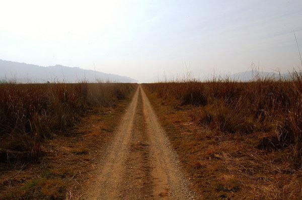 Dhikala Grassland.jpg