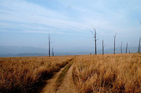 Another Grassland landscape.jpg