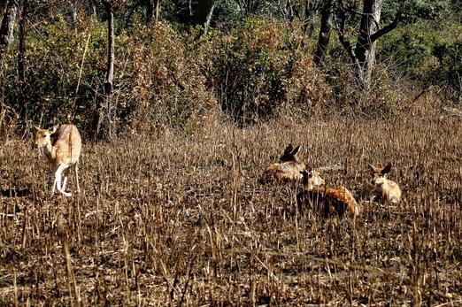 Deers 2 (1).jpg