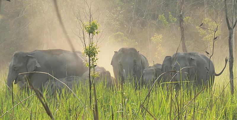 Eelephants1.jpg