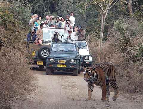 tigersafari.jpg