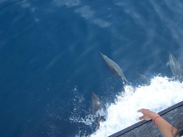 Name:  dolphin4.jpg Views: 1027 Size:  41.0 KB
