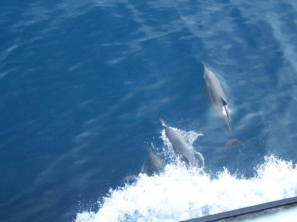 Name:  dolphin8.jpg Views: 1056 Size:  40.1 KB