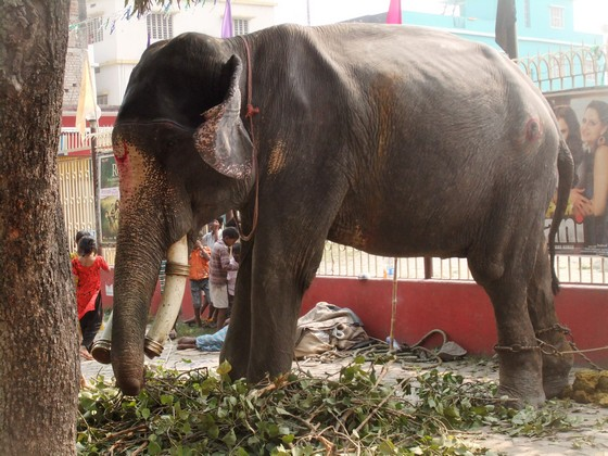 India Travel | Forum: Bihar - A short visit to the sonepur mela