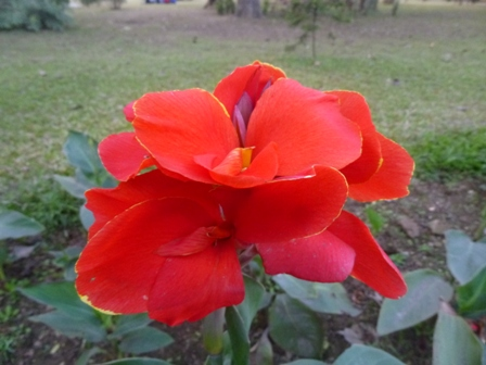 01. Flower at Jubilee Park.JPG