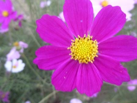 04. Flower at Jubilee Park.JPG