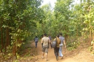 07. Way to Dharagiri Falls.JPG