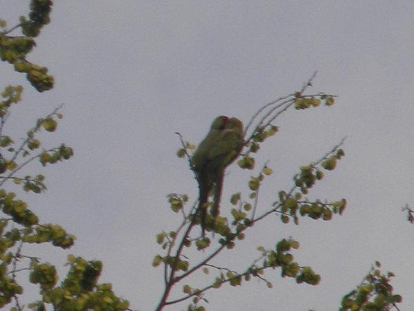 28. Bird at Burudi Lake.jpg