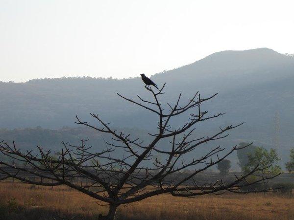 29. Bird at Burudi Lake.jpg
