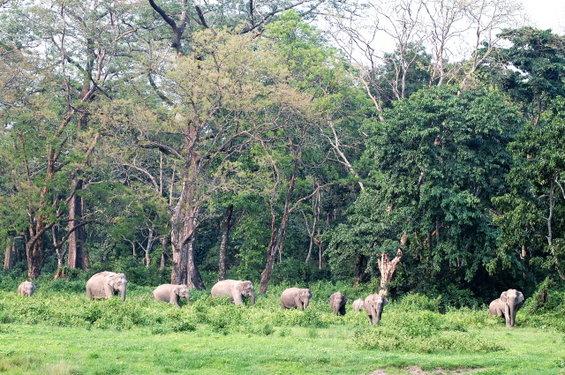 Name:  3 Elephants .jpg Views: 1090 Size:  99.9 KB
