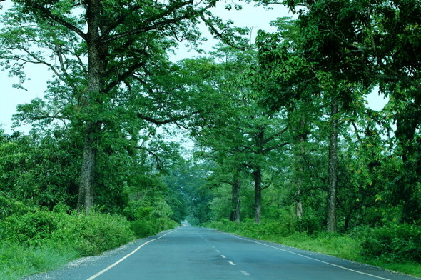 Name:  4 Road to Alipurduar From Hasimara.jpg