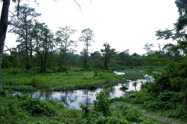 Name:  2 Choto Nadi (Malangi River) behind Malangi Lodge.jpg