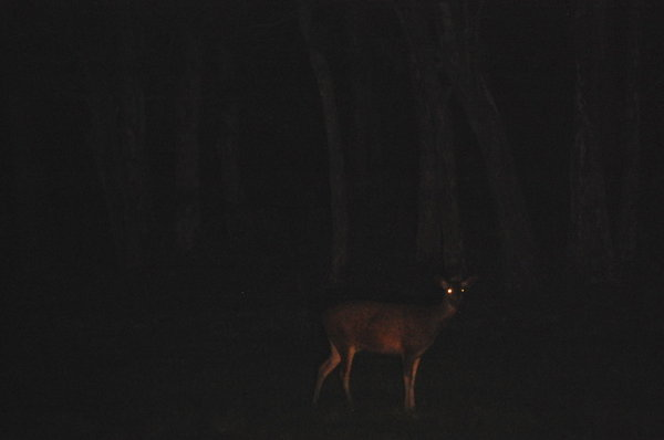 Name:  8 Deer.jpg