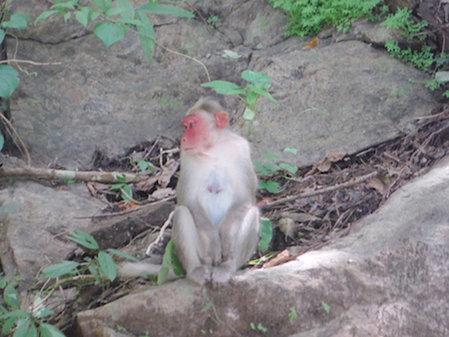 Name:  2-monkey.jpg Views: 213 Size:  48.8 KB