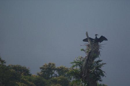 Name:  2-kerbird.jpg Views: 214 Size:  17.4 KB