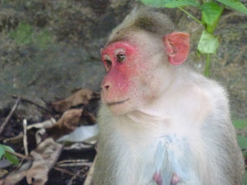Name:  monkey5.jpg Views: 185 Size:  69.7 KB