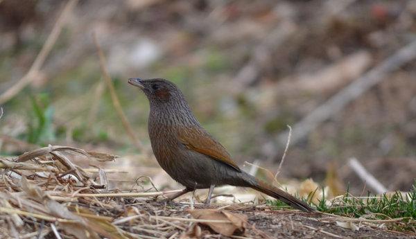 Name:  Bird2 (1 of 1).jpg Views: 109 Size:  50.0 KB