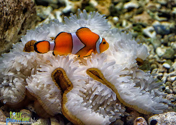 Name:  Andaman_Nemo-Fish.jpg Views: 846 Size:  86.1 KB