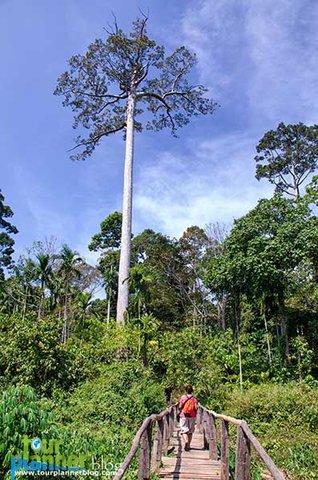 Name:  Havelock_elephanta-trek.jpg Views: 840 Size:  59.5 KB
