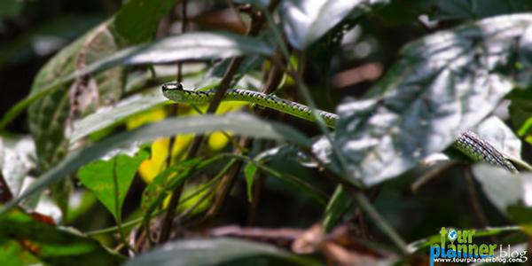 Name:  Havelock_elephanta-trek_snake.jpg Views: 815 Size:  65.0 KB
