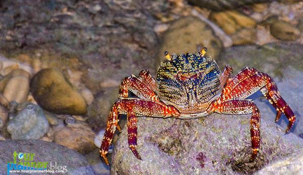 Name:  crab-neil-island.jpg Views: 794 Size:  79.5 KB