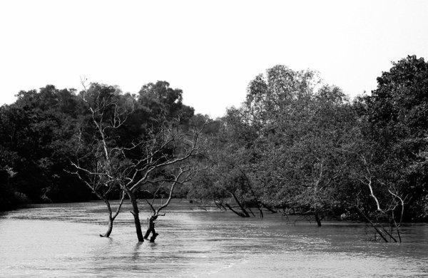 Name:  4 River.jpg Views: 243 Size:  54.7 KB