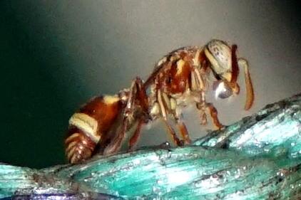 Name:  bees-3.JPG Views: 100 Size:  83.9 KB