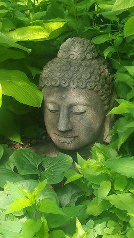 buddha head garden.jpg