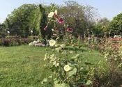 Spring ! Different Colors ! by Pammi.  Tags: New Delhi, Delhi.