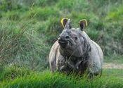 Wild Rhino by abhishek77.  Tags: chitwan national park, rhino, wild.