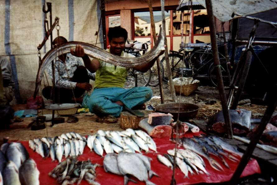 Fishing in nagpur india travel forum for Hagen s fish market