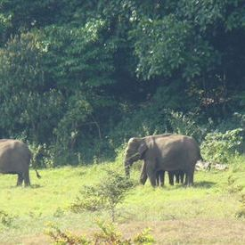 Wild elephants on our trek path @ Periyar Sanctuary