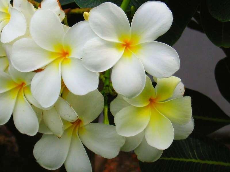 Pondicherry flowers india travel forum indiamike pondicherry flowers mightylinksfo