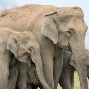 Elephants at Dhikala