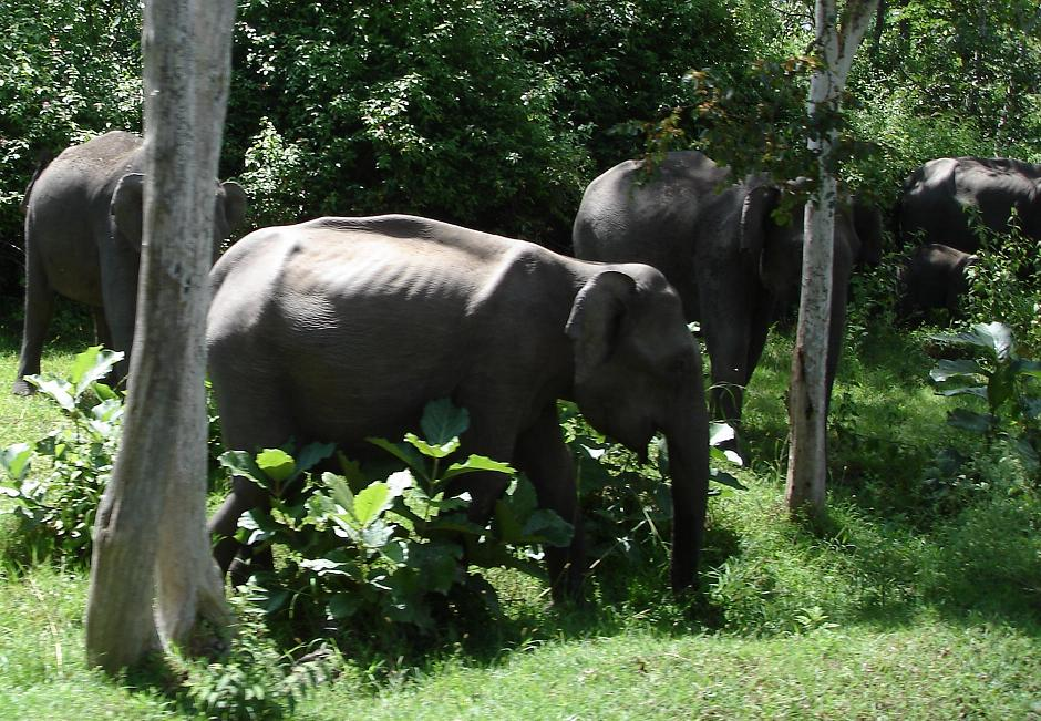 Bandipur National Park India Travel Forum Indiamike Com