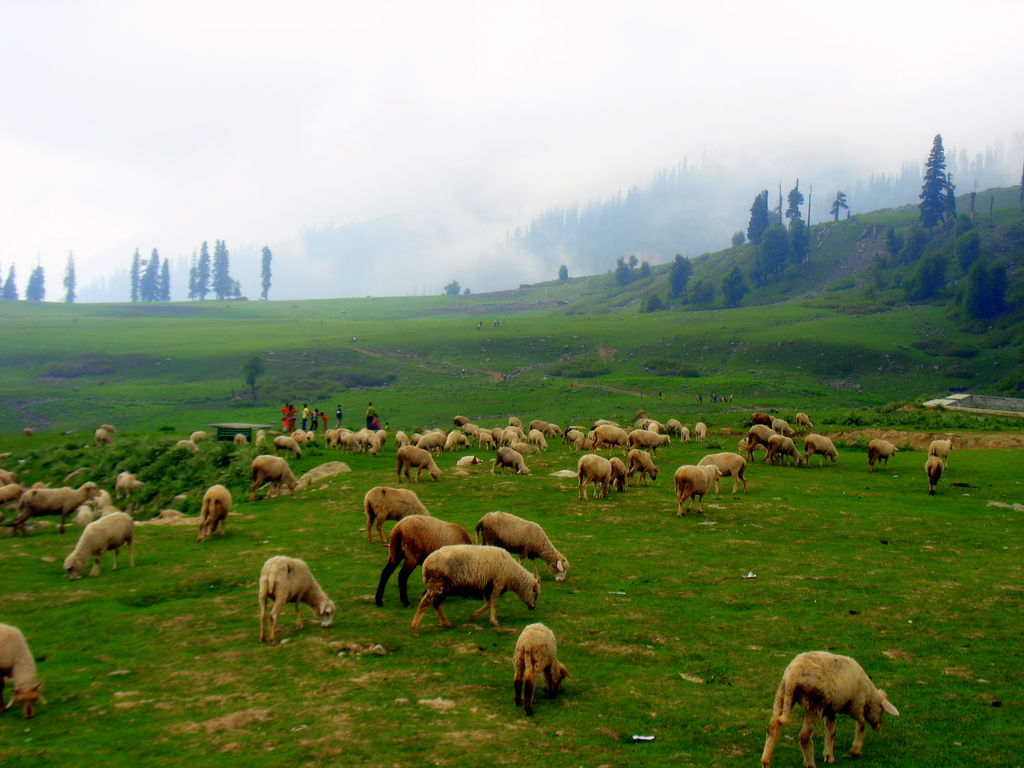 Gulmarg India  city images : Gulmarg India Travel Forum | IndiaMike.com