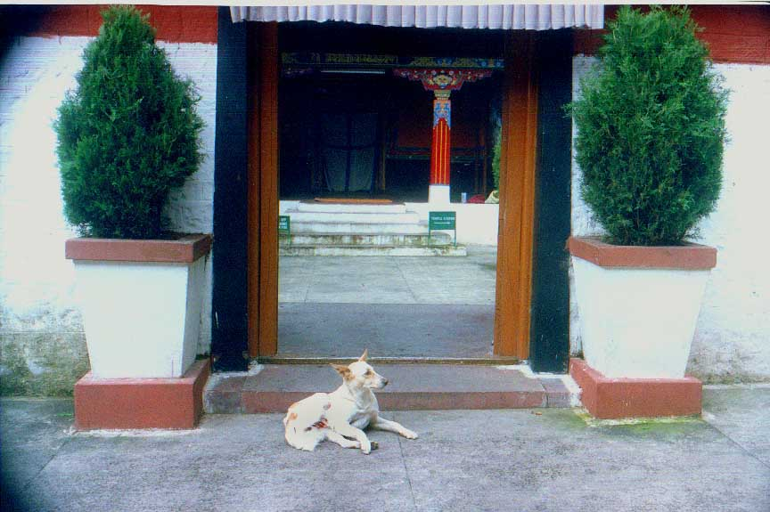 Dharamsala - It's a dogs life 4