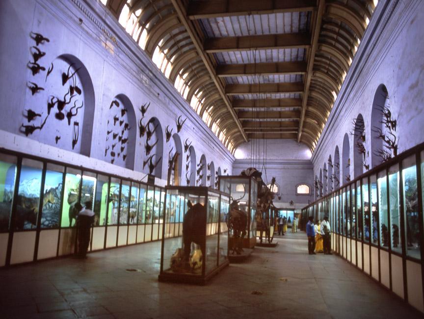 The Indian Museum, Calcutta