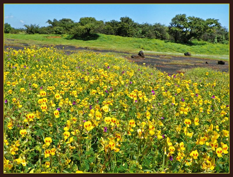 KAAS WILDFLOWER PLATEAU - AGAIN !!!