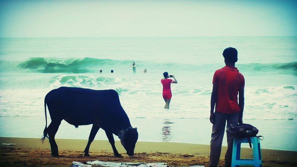 Patnem Beach Cow