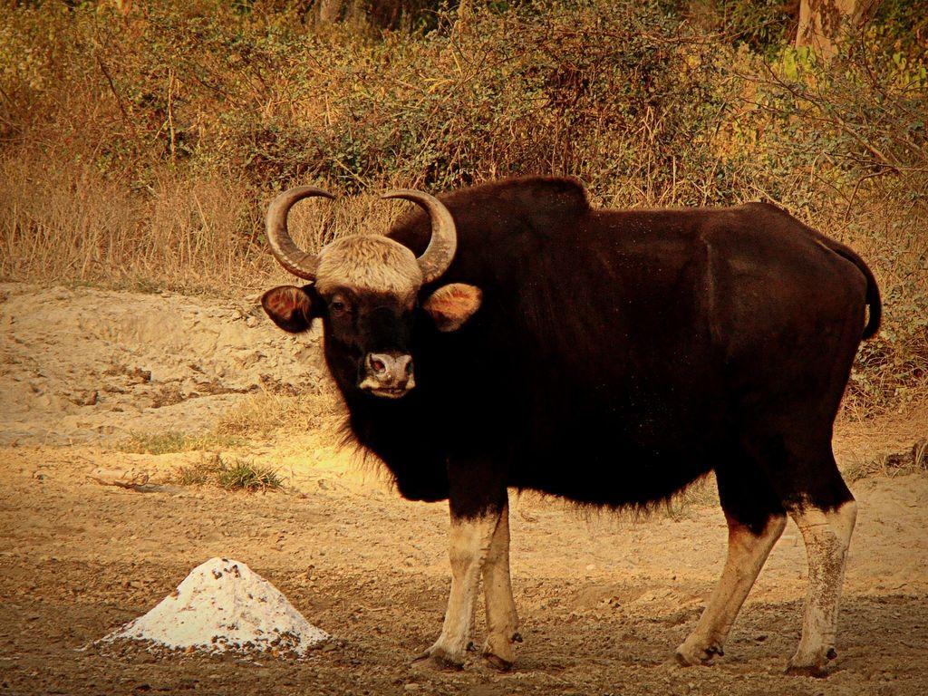 Indian Food Buffalo Ny