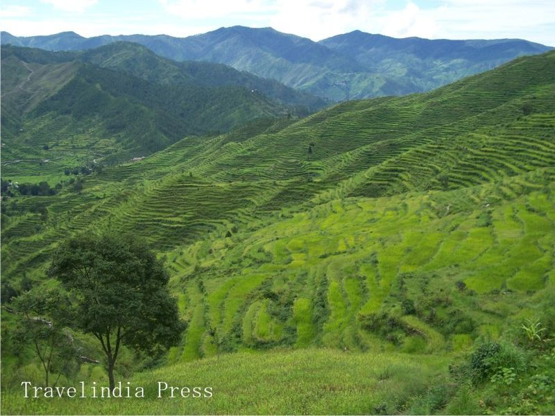 Terrace farming in garhwal hills india travel forum for Terrace india