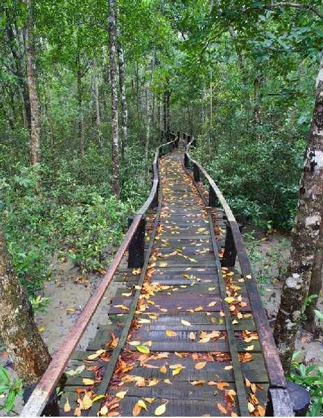 Walkway Inside Sundarbans