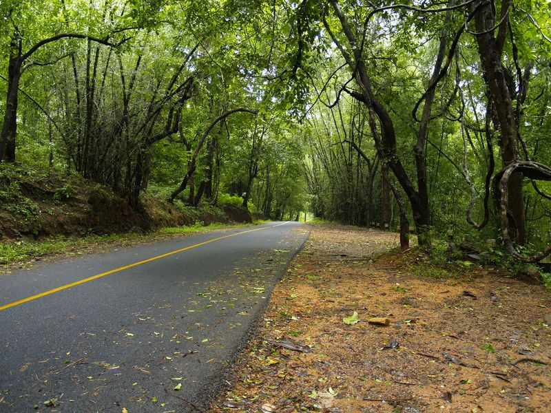 Thrissur India  city images : Athirappilly, Thrissur, Kerala, India India Travel Forum | IndiaMike ...