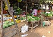 Chapora Veggie Stand by Lou Wilson.  Tags: Vagator Beach, Shops and Businesses, Food in India, food, chapora.