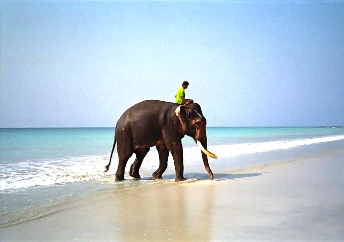 Elephant after Bathing